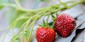 truskawki, zdrowie, dieta